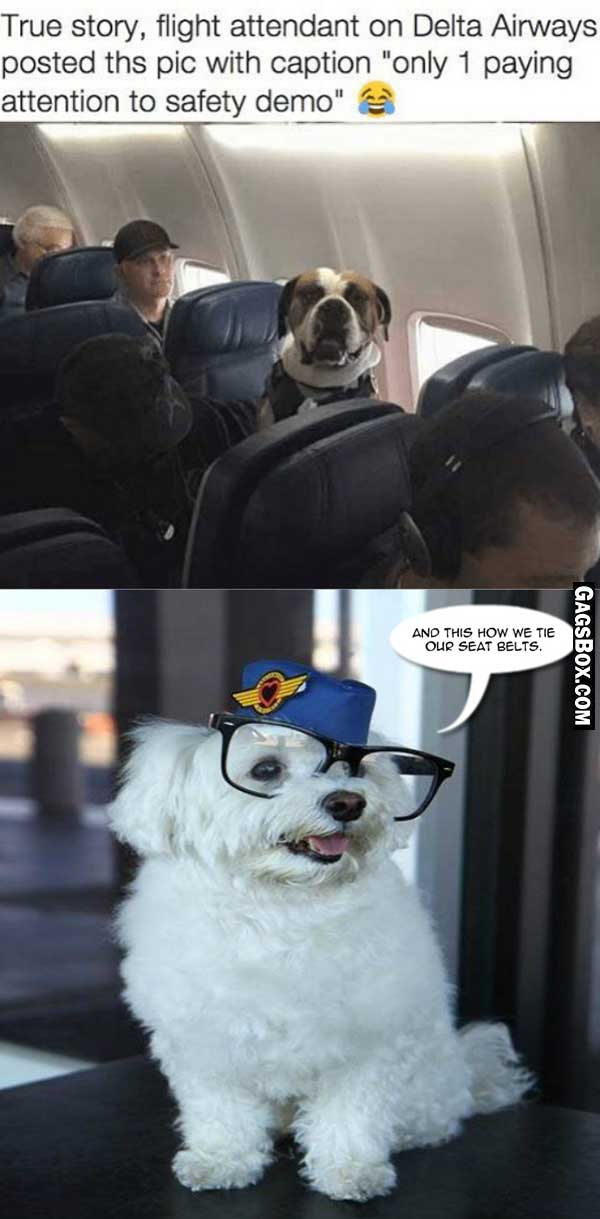 Air hostesses of the dog world