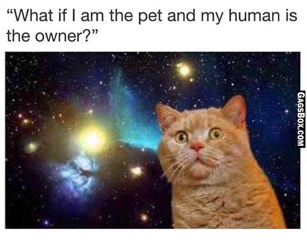 Cats Knows The Reallity