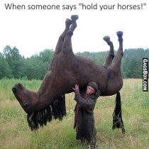 Hold Your Horses
